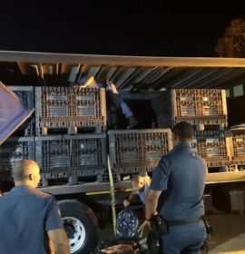 Two suspects arrested in Touwsriver with a truck load of abalone