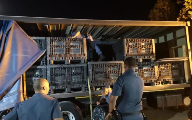 Two suspects arrested in Touwsriver with a truckload of abalone to the value of R28 million