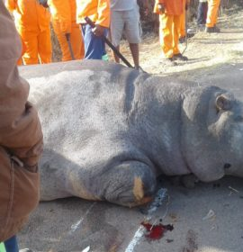 A truck crashed into a hippopotamus on the R101 near Pienaarsrivier