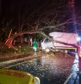 Truck crashes into a tree, Port Shepstone